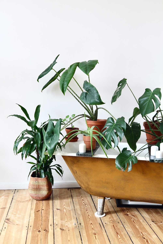 Botanical Houseplants Bathtub