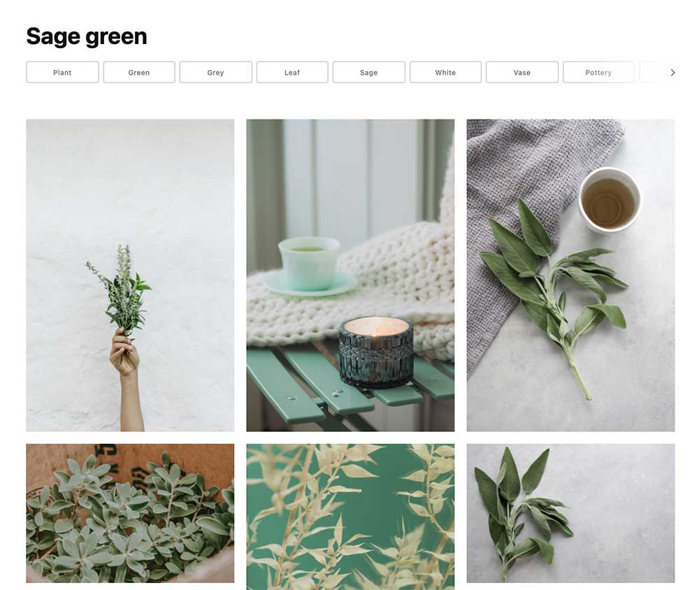 Free Sage Green Stock Photos for Bloggers